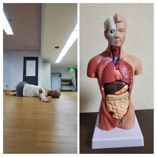 12/3(火)【新潟】内臓の声に気づけるようになろう!~内臓と筋肉の関係を学ぶ~