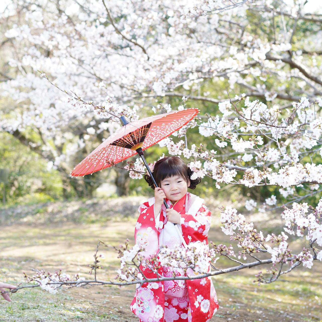 スタジオ樹木 七五三ロケ撮影春プランお申し込み