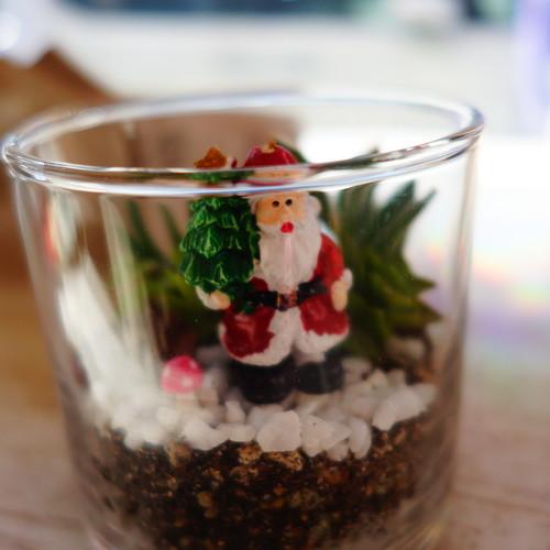 クリスマスのグラステラリウム作り