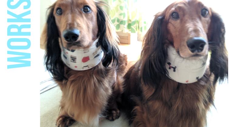 🔰愛犬のための手作りワークショップ