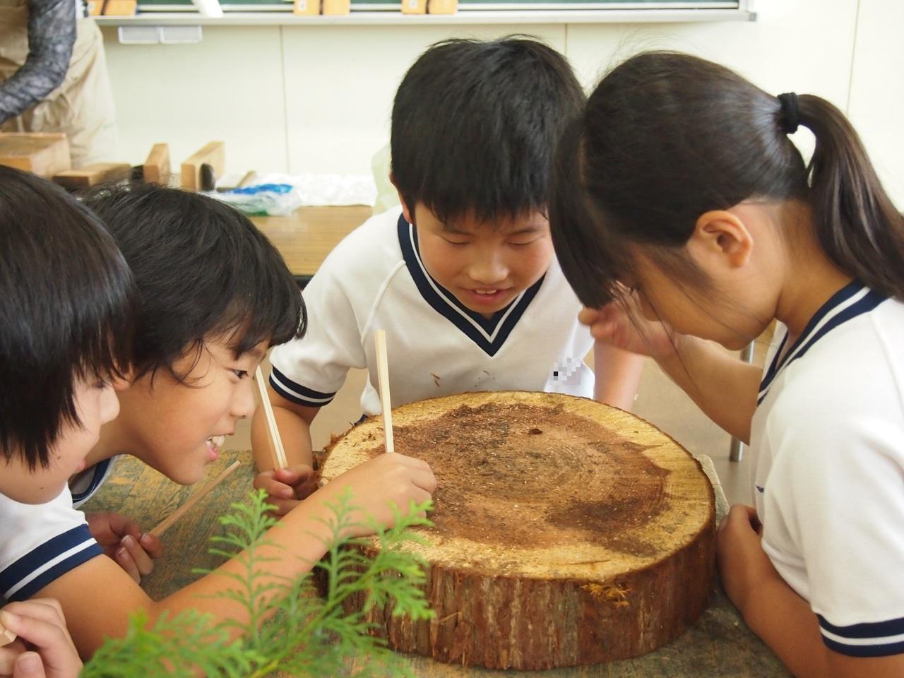 なつやすみ 森の自由研究  & お箸作り