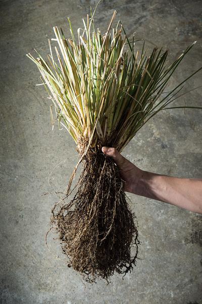 5/28(金)開催 京都STC3共催 村上志緒先生の植物の生きた使い方 ハーブの自然学 「知る」「活かす」