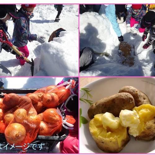 雪中野菜を掘り出して食べよう