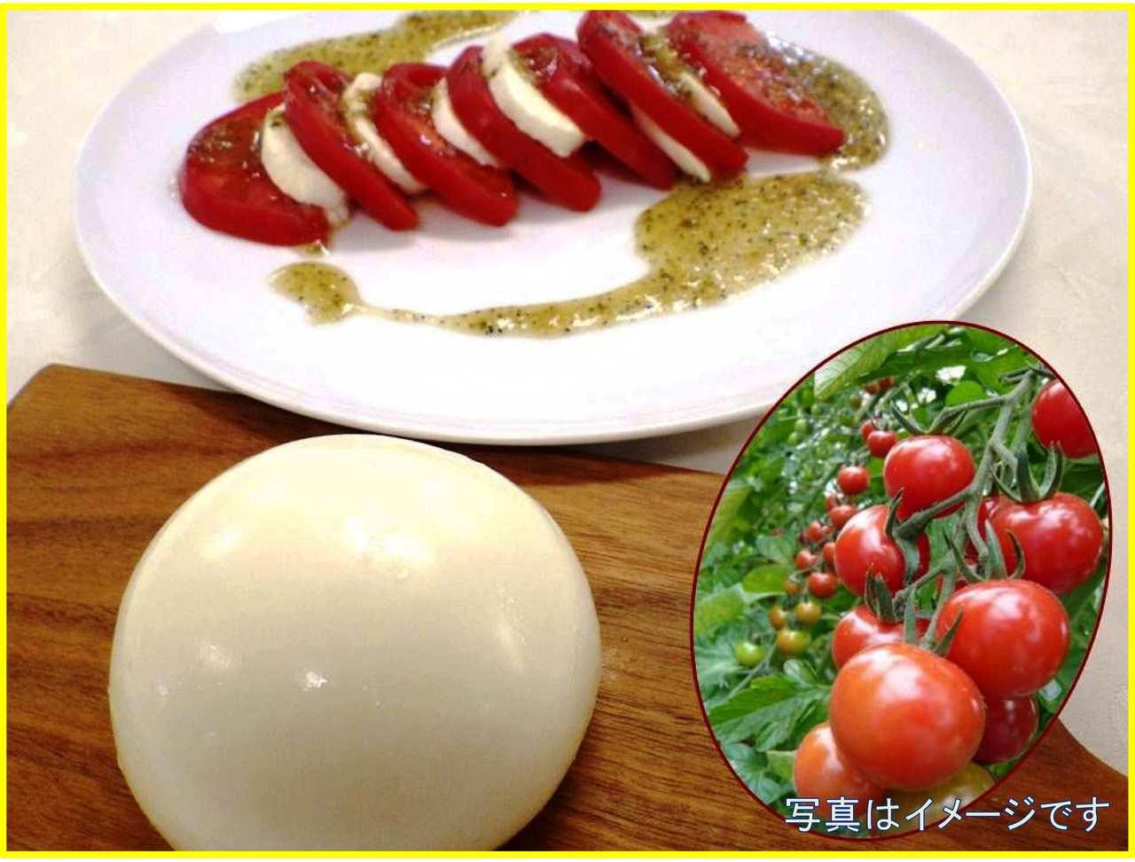 【ノースプレインファームさんに教わる】 モッツァレラチーズとストリングチーズを作ってみよう!(ミニトマト収穫付)