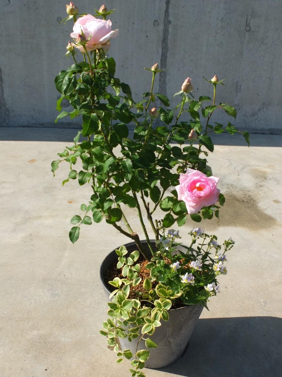 【池袋3/19】新企画「バラのある豊かな暮らし」/講師 後藤みどりさん