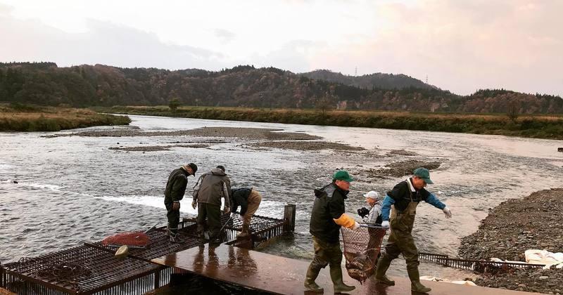 ようのじんぎりオーナー制度 〜鮭川村の「鮭」のオーナーになりませんか?〜