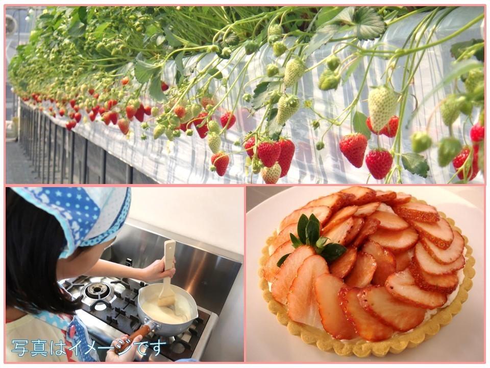 【バレンタイン企画】 いちごを収穫してタルトを作ろう