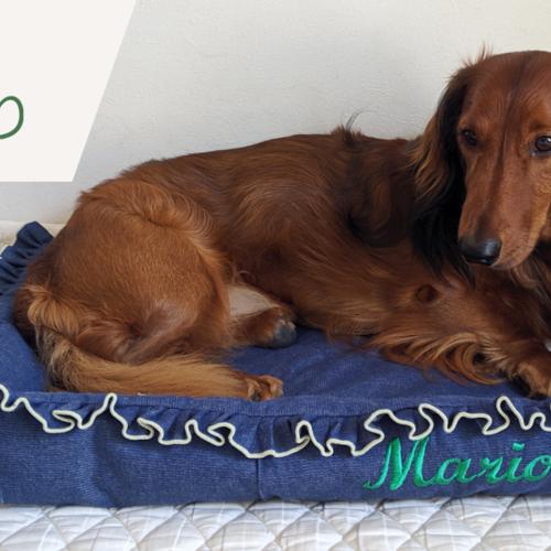 愛犬のベッド(1dayホビー講座)★動物愛護支援対象レッスン