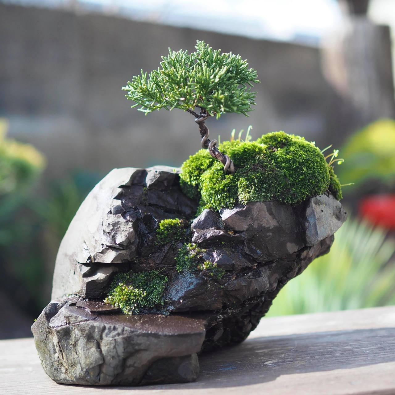 小さな石付き盆栽を作ろう!
