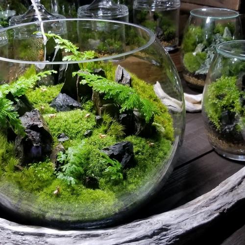 【 名古屋 】お部屋を彩る苔盆景ワークショップ mossmile