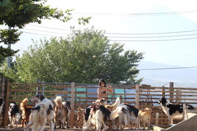 【静岡県三島市】「セラピー犬の牧場 富士の里」の予約はこちら