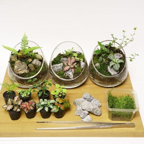 【 東京 】石と植物を使ったテラリウム〔茅場町〕