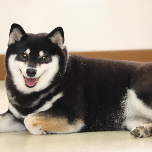 【神奈川県大和市】「セラピー犬ふれ合い施設 人と犬との憩いの場所」の予約はこちら