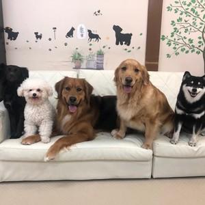 人と犬との憩いの場所&富士の里