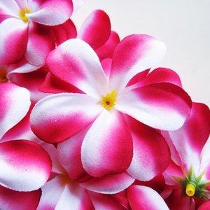 笑顔になれるサロン「Lei*Plumeria」
