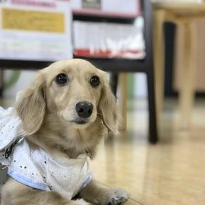 犬の学校 わんstep