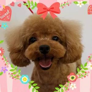 prettydog