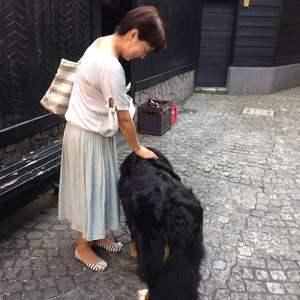 ペット鍼灸セラピーハウス『茶居day〜チャイディー〜』