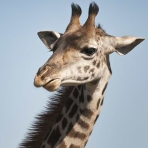 聞く耳処「きりん家」 - giraffe's room -