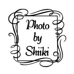 シイキ写真館 WEB予約フォーム