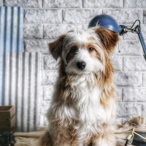 Dog Photo SU-PAPA